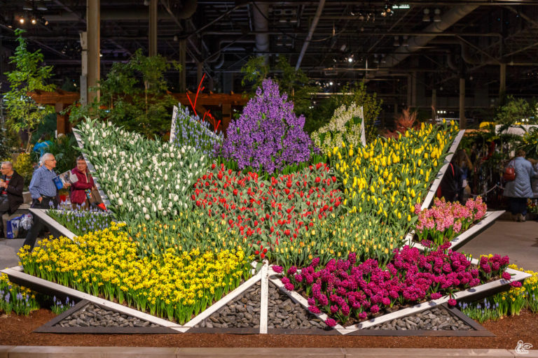 Canada Blooms (2017)